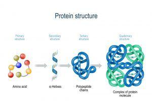 ساختار پروتئین